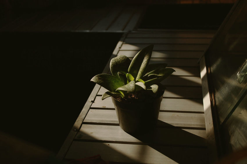 tumbuh Photooftheday Iphonesia Plant Plant Life darkness and light Light And Shadow EyeEm Best Shots EyeEm Best Shots EyeEm Gallery Getting Inspired Sunlight Tree Light Beauty Flowers Summer Nature EyeEm Masterclass Mothernature Beautiful Black Background Close-up