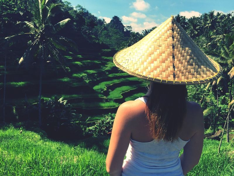 Real People Rear View Asian Style Conical Hat Tree Tradition Nature Agriculture Rice Paddy Terraced Field Rice Field In Ubud Bali Plantation Tegalalang Rice Terraces Rice Growth Rice