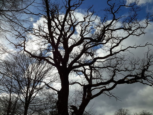Cloud Cloud - Sky Winter Denmark Sorø Tree Trunk Tree Branch Low Angle View Nature Sky Beauty In Nature Growth Day Outdoors Silhouette No People Bare Tree Freshness