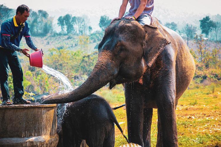 People washing elephants at farm