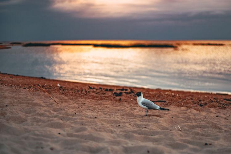 Seagull on a beach