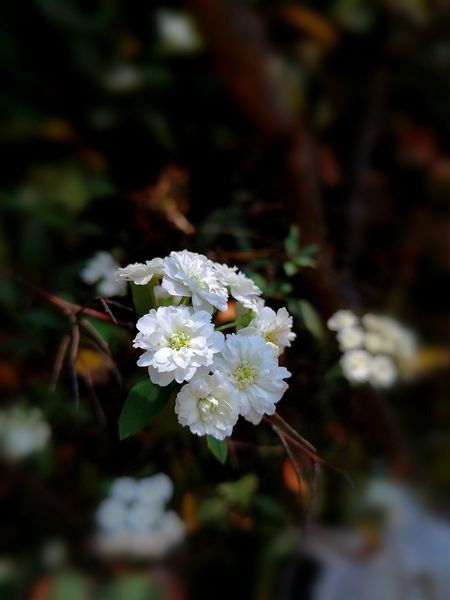 The Week On EyeEm Relaxation Day Close-up Flower Nature Fragility Focus On Foreground Plant Freshness No People Petal Water Beauty In Nature Animals In The Wild Flower Head Outdoors Animal Themes