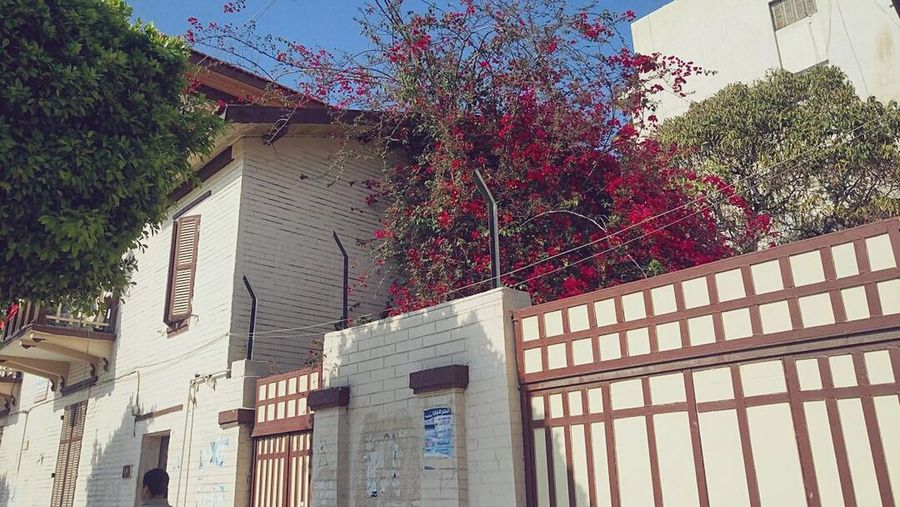 Architecture Tree Sky Red Window Flowers Egypt