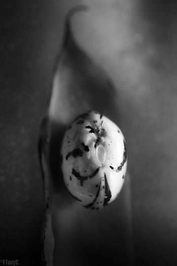 Bean Beauty In Nature Blackandwhite Borlotti Beans Cooking Embryo Food Gardening Ingredient Kitchen Macro Micropyle Monochrome Seeds Testa Cyclops Minion  One Eyed Alien