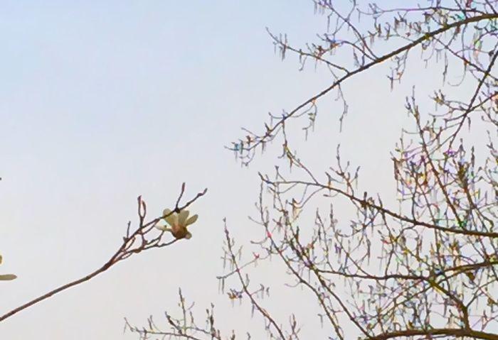 Beijing Flowers Spring Depressing Days