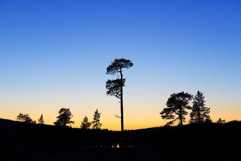 Silhouette trees on landscape against clear sky