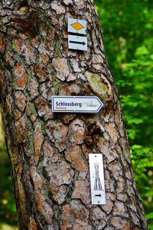 Hiking guiding signs on a tree Guiding Hiking Signs Close-up Communication Day Guidance Guide Nature No People Outdoors Text Tree Tree Trunk