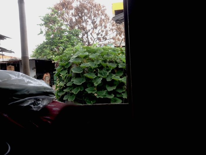 I look from inside home Plant Nature Window Mode Of Transportation Growth Day Tree Indoors  House