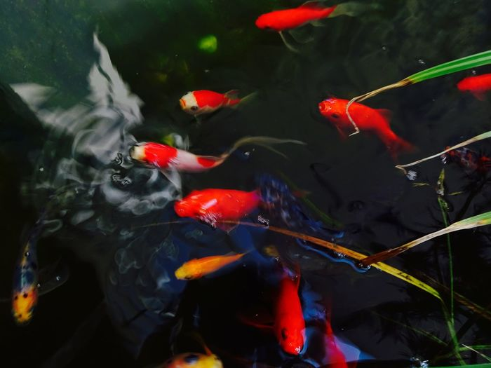 Close-up of fishes in water