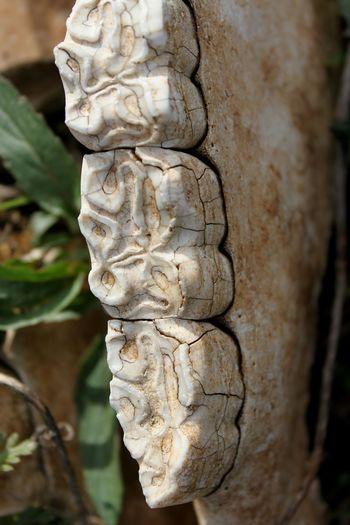 Jawbone Close-up Outdoors Day No People teeth Nature Horsebones Decay
