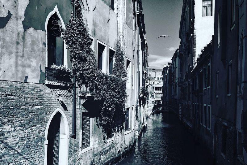 Venice Canals Venice, Italy Architecture Venetian Architecture Venezia Black And White Photography Serenissima Seagull Seagull In Venice Seagull In The City