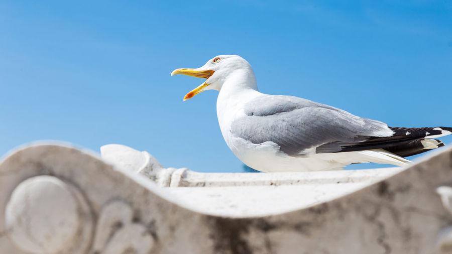 Regurgita Bird Photography Animal Animal Themes Bird Blue White Color