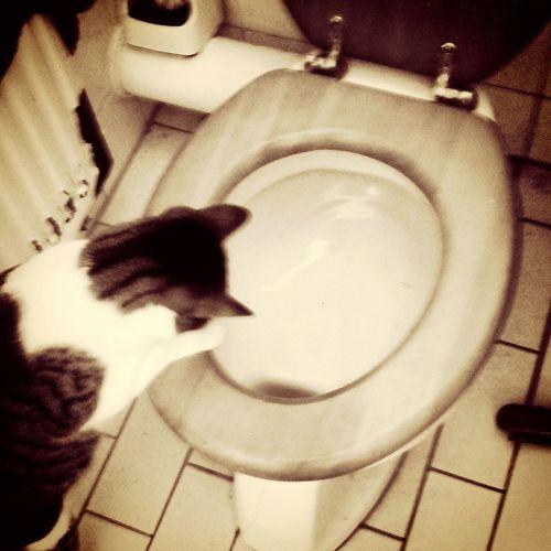 Bnw_friday_eyeemchallenge Vinkeveen Cat checking the toilet. Where did it all go? Feeling At Home Familylife Domestic Scene