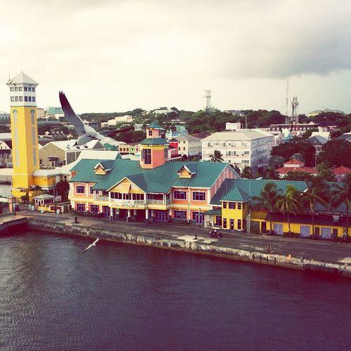 Hello World Bird Nassaubahamas