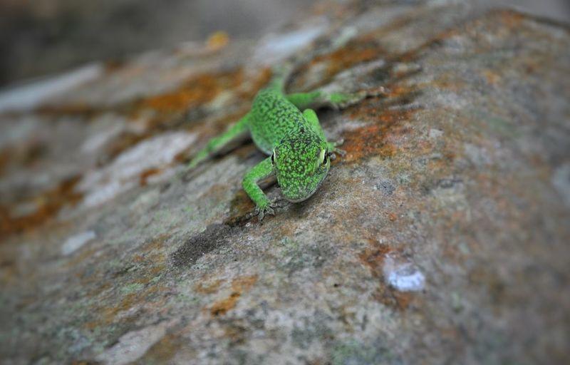 Hi! EyeEm Animal Lover Colour Of Life Nature Photography Animal Photography Lizard Cameleon Reptile Hunting Serradesintra