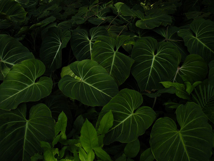 Botanical Gardens Botany Brazil Green Growing Jardim Jardimbotanico Leaf Leaves Natural Pattern Nature No People Outdoors Plant Rio De Janeiro Rocio Valenzuela Tranquility