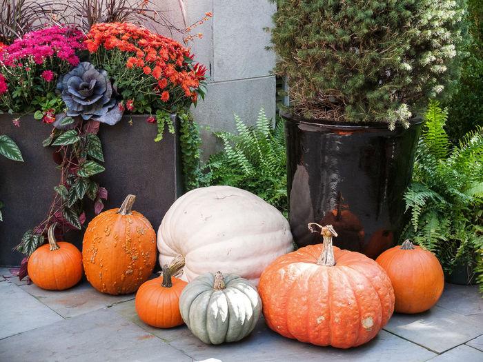 Thanksgiving. America Autumn Decoration Fall Garden Gardening Pumpkin Pumpkins Thanksgiving USA