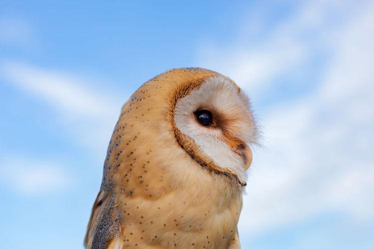 Close-up of a bird against sky