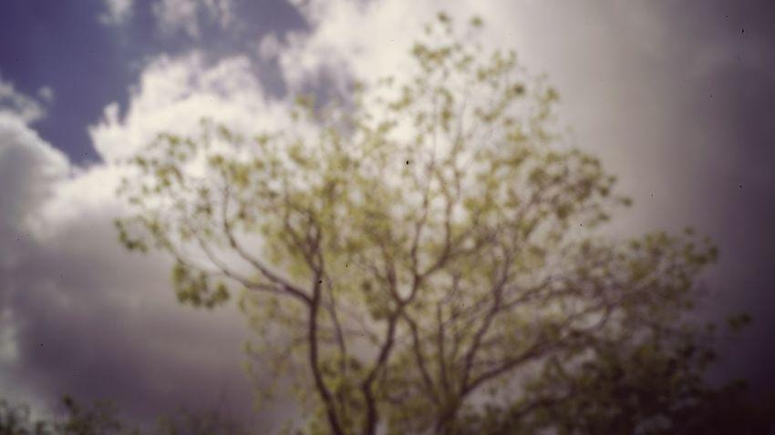 No People Tree Sky Pinhole Camera Pinhole Nature Blurry
