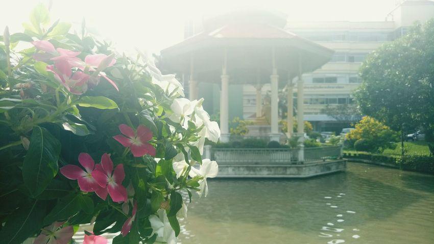 Flower Water City Architecture Building Exterior Built Structure Plant