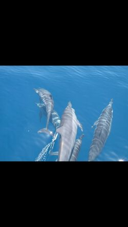 Animal Themes Dolphins Near Focus Best Pictures Taken By Me Amazing Experience ❤ Love It ♥