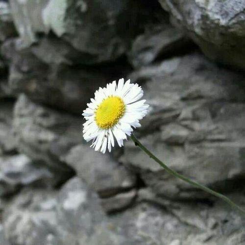 Flor solitaria Gardening Picking Flowers  Planting Enjoying Life