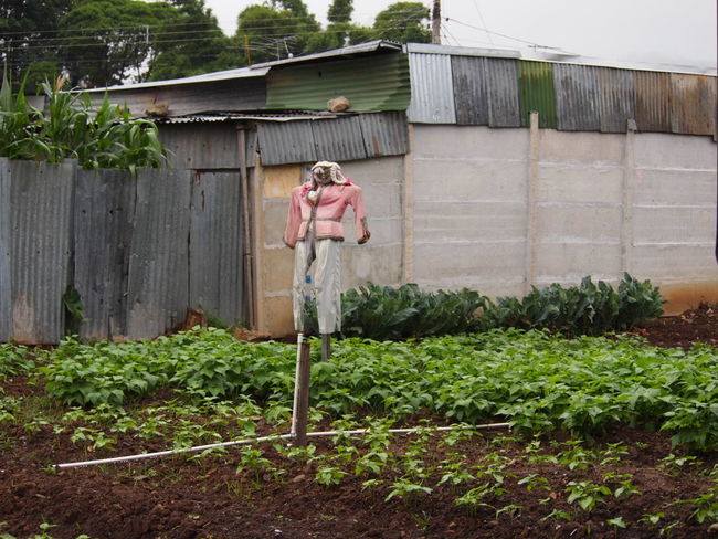 EyeEmNewHere Agriculture Day Freshness Front Or Back Yard Full Length Gardening Growth Outdoors People Plant Scarecrow Standing