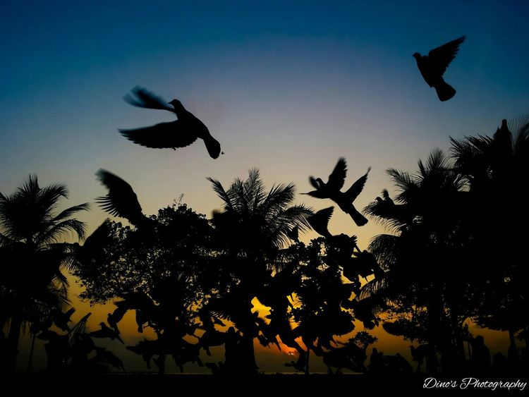 Dino's Photography Maldives Malecity Artificial Beach Artificial Beach Morning Sun Sunrise Birds Bird Pigeon Pigeons 43 Golden Moments