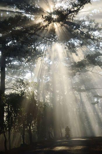 Sáng sớm ở Đà Lạt, ray ^^ ðà Lạt Tree Fog Sunlight Sunbeam Forest Sky Landscape Sunrays Foggy Pine Tree EyeEmNewHere