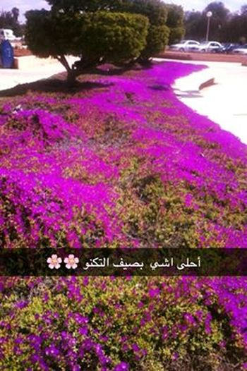 Beauty In Nature Flower Freshness Growth Jordan Jordan University Of Scince And Technology Nature No People Outdoors Pink Color Plant Purple Summer Summertime University University Campus