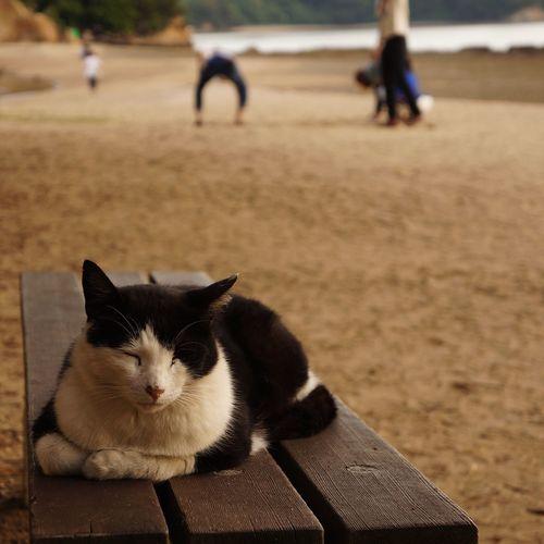Cat 小豆島 香川 猫 ねこ エンジェルロード 夕景 Sunset Evning