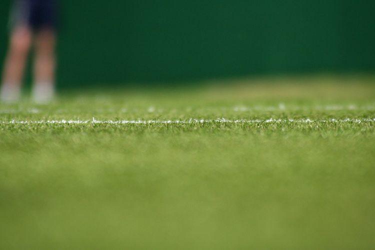 Grassy field in court