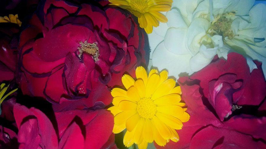 Full frame shot of multi colored flower bouquet