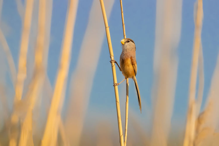 Low angle view of bird perching on plant