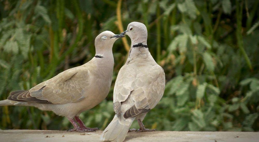Lover birds First Eyeem Photo
