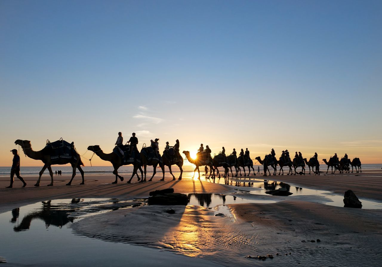Silhouette people riding camels at beach against sky during sunset