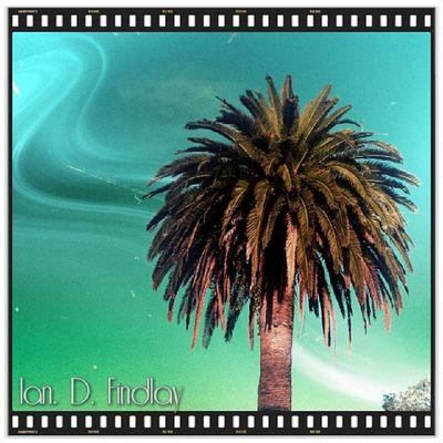 Takapuna Auckland Nzherald ABetterCamera handyphoto sunset palmtree