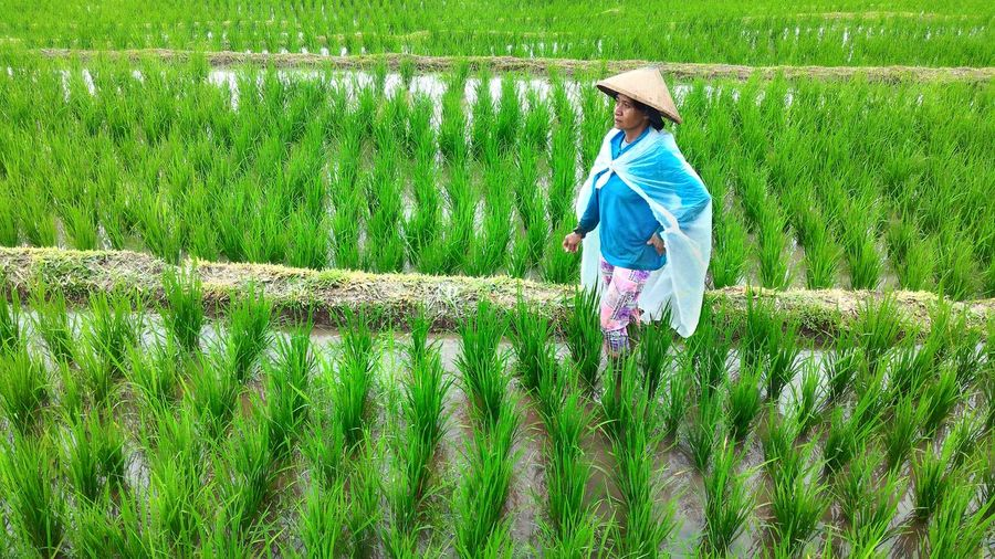 Bali, Indonesia Rice Terraces Balinese Balinese Woman Balinese Life Working Hard Explorebali Agriculture Rural Scene Baliphotography Traveldestination People And Places. People And Places