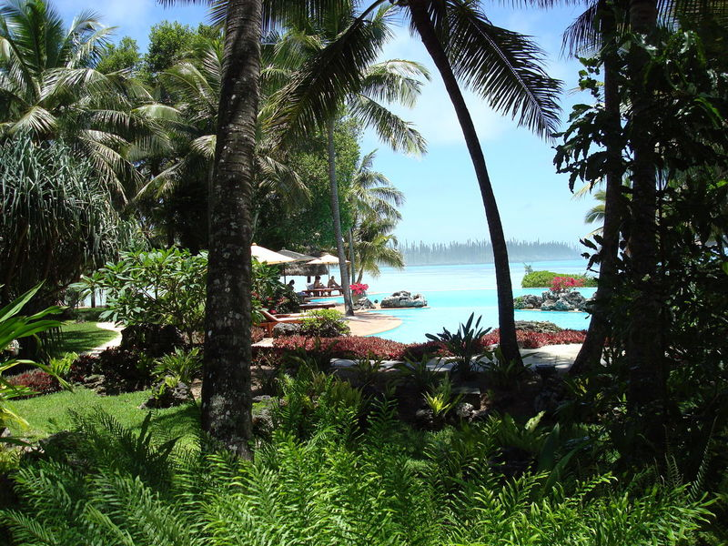Blue Sky Ile Des Pins Lagoon Le Meridien Hotel Light Nature Nouvelle Calédonie Pacific Ocean Palm Tree Paradise Relaxing Moments Summer The Isle Of Pines Travel Tropical Tropical Climate