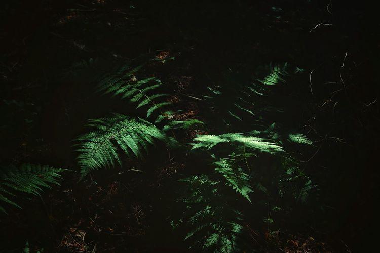 Close-up of fern tree at night