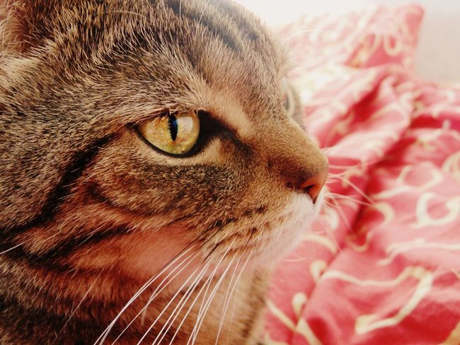 Cat Eyes Cats кот котэ животное няша прелесть пупсик лапа пушистик усатик глаза  мимими