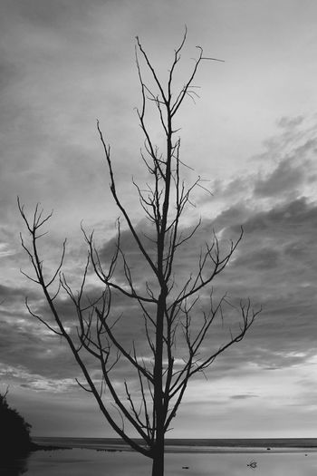 """Left nothing"" Typhoon B&w Photography Check This Out Eyeem Philippines Polarr Canon Philippines Tree Ilocos Sur"