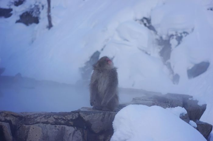 Cold Temperature Winter Snow Weather Nature Animal Themes Mammal Animals In The Wild Mountain Snowcapped Mountain Beauty In Nature Outdoors No People Non-urban Scene Rock - Object Frozen Scenics Sky Japanese Macaque Hot Springs Travel Photography Ski Holiday Travel Destinations 地獄谷野猿公苑 here is Jigokudani-Snow-Monkey-Park Miles Away