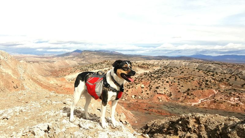 Hiking❤ Doggy Backpack Doggy Hiking💙 Man Bestfriend Exploring Nature Desert White Mesa Desert Landscape