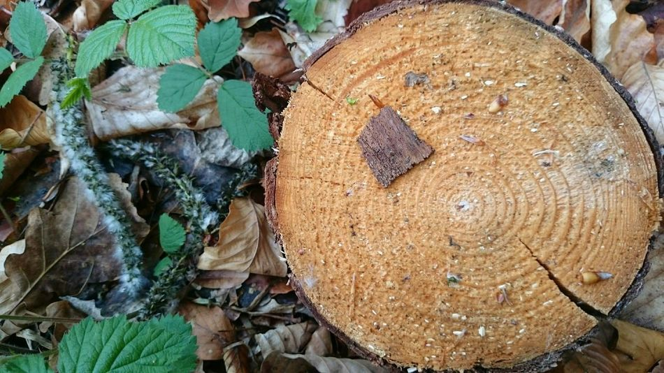 Wooden Texture Forest Ground Leafs Naturelovers Cutted Tree Stump View From Above Annual Ring A Bird's Eye View