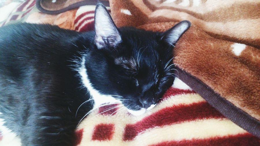 кот кровать Соня
