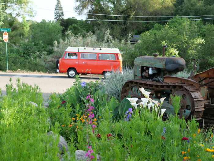 VW Bus Vintage Car Bus VW Flower Tree Rural Scene Agriculture Land Vehicle Water Field Car Plant Green Color Tractor Truck Agricultural Equipment