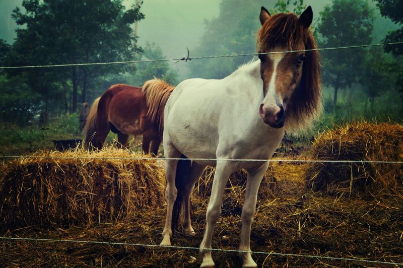 Horses standing in pen during foggy weather