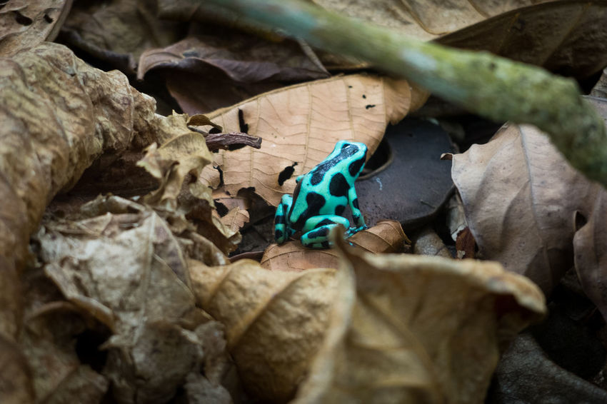 Costa Rica Frog Green Hiking Black Hike Jungle Leaf Ocean Poisonous Road Trip Wildlife