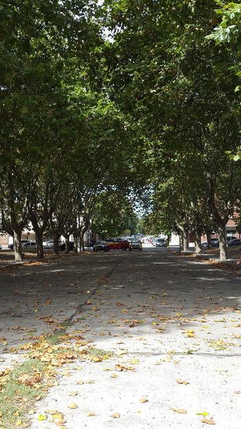 Hojas De Otoño Autumn Colors Autumn Leaves Autumn Is Coming Otoño 🍁 Autumn Trees Park Plaza Just Walking Taking Photos Urban Spring Fever